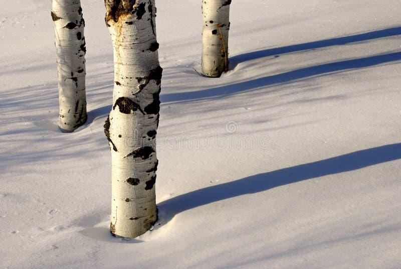 Árboles en la nieve fotografía de archivo