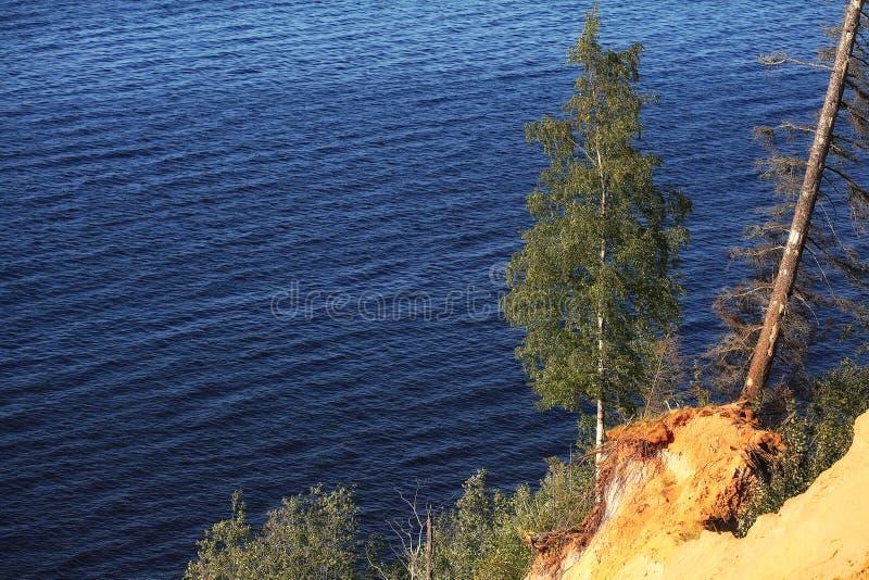 Árboles en la orilla del lago imágenes de archivo libres de regalías