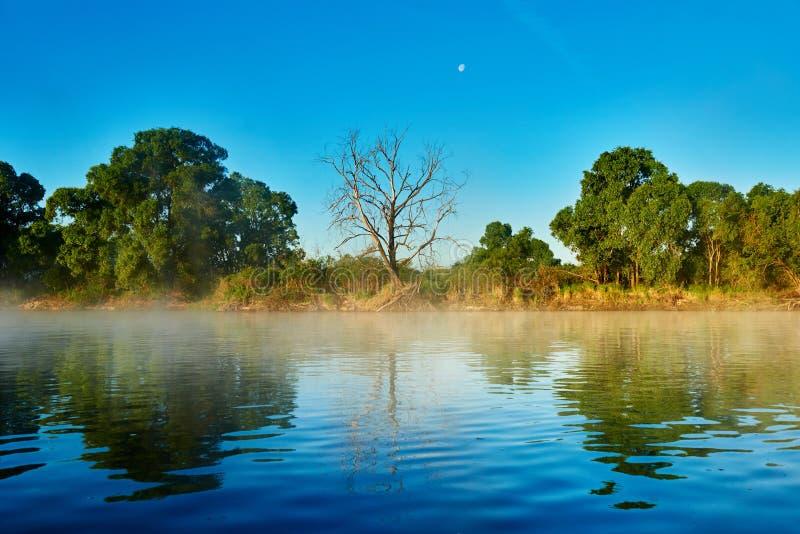 Árboles en la orilla del río por mañana de niebla fotografía de archivo