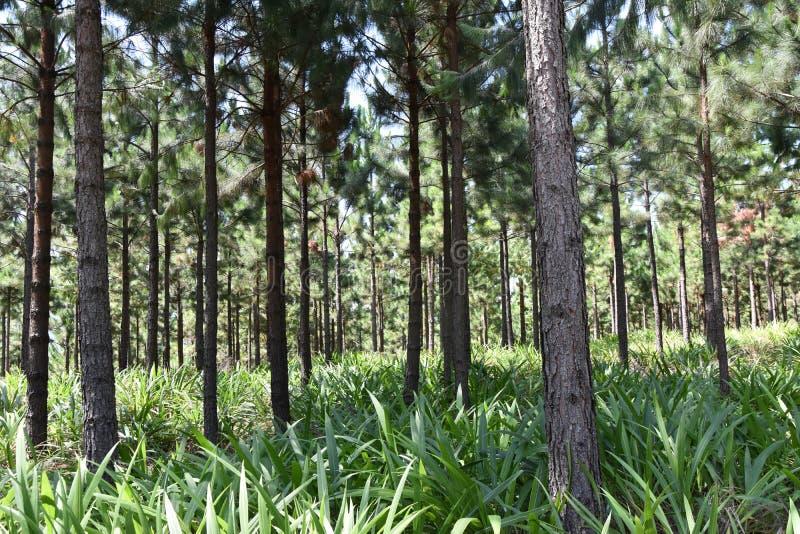 Árboles en la plantación imagen de archivo