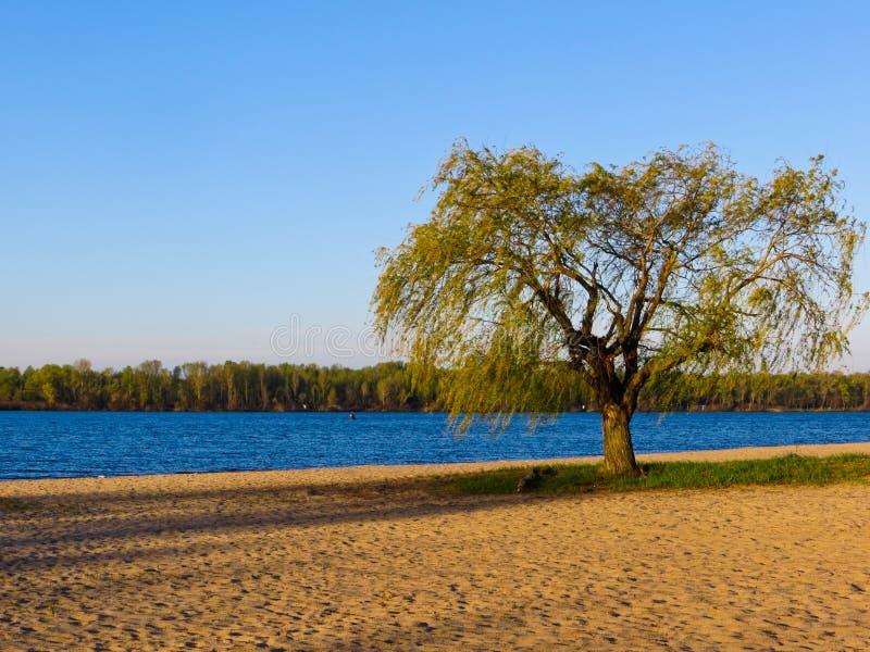 Árboles en la playa imagen de archivo libre de regalías
