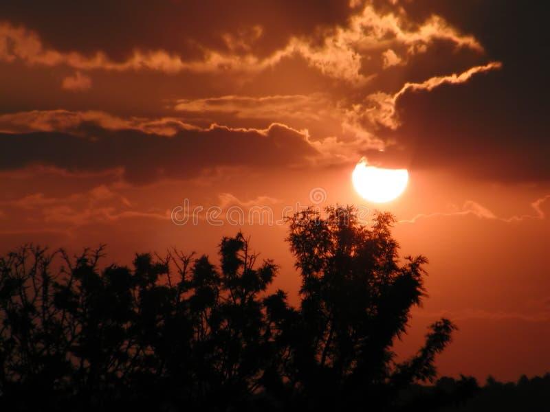 Árboles en la puesta del sol fotografía de archivo libre de regalías