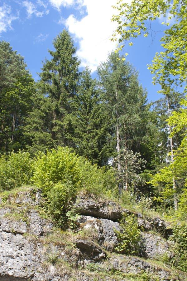 Árboles en la roca imagen de archivo