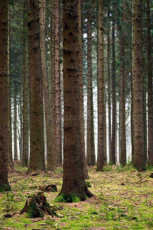 Árboles en las maderas imágenes de archivo libres de regalías