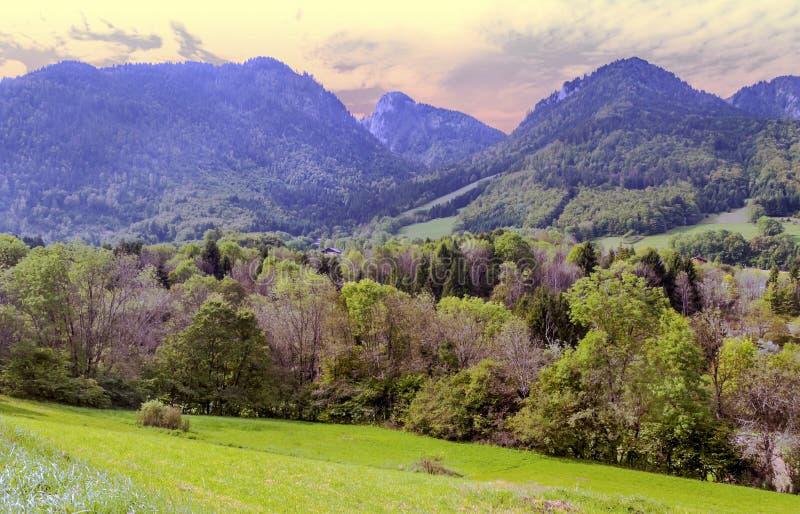 Árboles en las montañas francesas imágenes de archivo libres de regalías