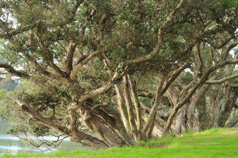 Árboles en las orillas del río imagenes de archivo