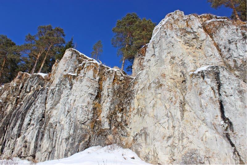 Árboles en las rocas imagenes de archivo