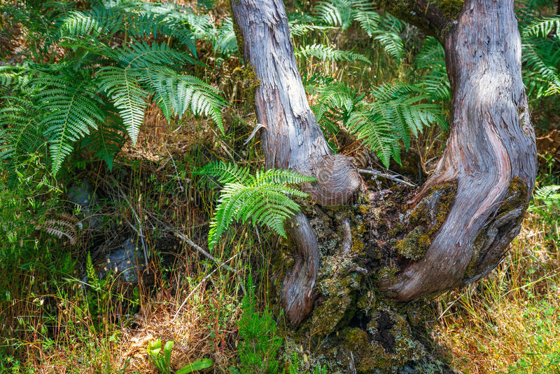 Árboles en Laurel Forest imagen de archivo