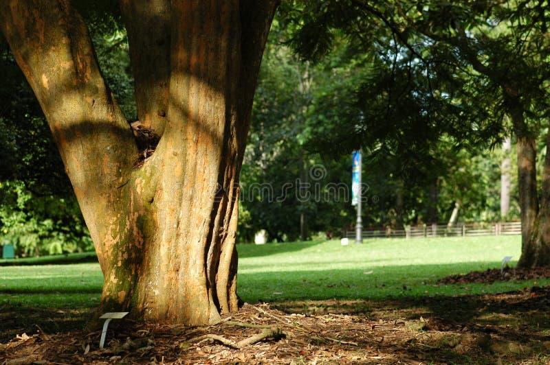 Árboles en los parques fotografía de archivo libre de regalías