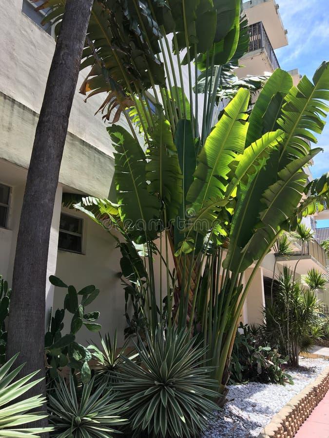 Árboles en Miami, la Florida fotos de archivo libres de regalías