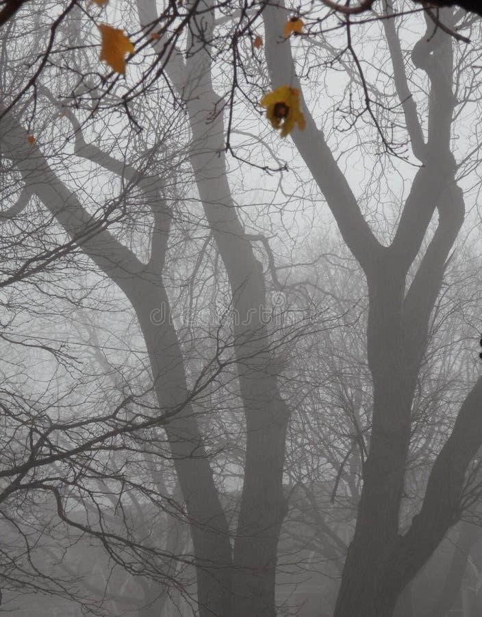Árboles en niebla. El otoño pasado hojas. imagen de archivo libre de regalías