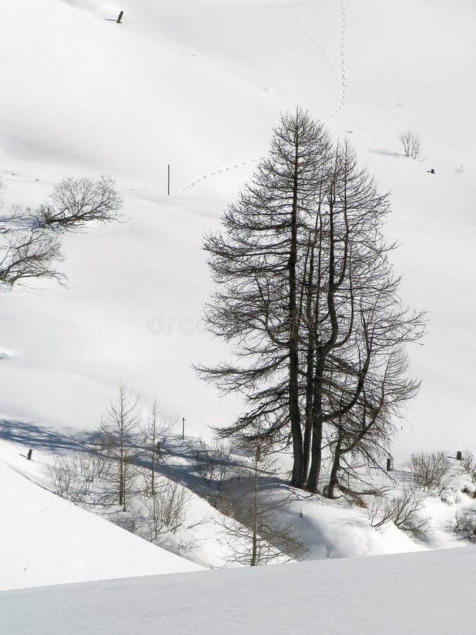 Árboles en nieve foto de archivo libre de regalías