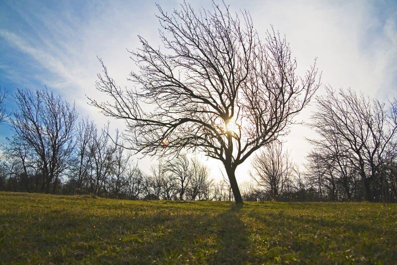 Árboles en paisaje fotografía de archivo