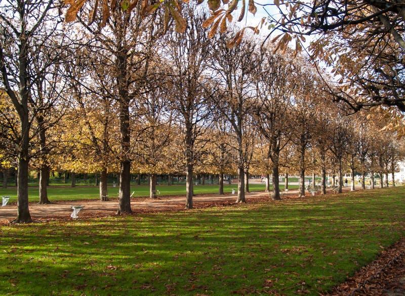 Árboles en París foto de archivo libre de regalías