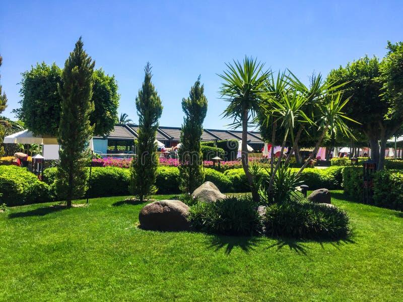 Árboles en parque fotos de archivo