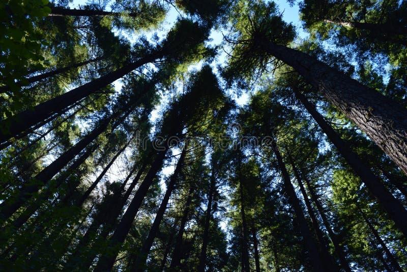 Árboles en Portland fotos de archivo libres de regalías