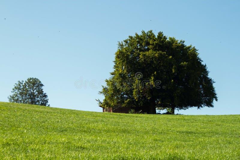 Árboles en prado imagenes de archivo
