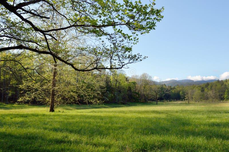 Árboles en primavera, ensenada de Cades fotografía de archivo