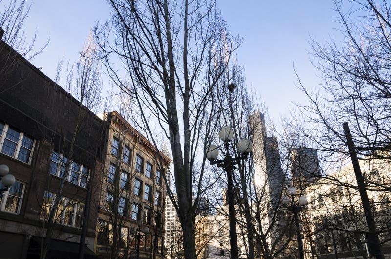 Árboles en Seattle fotografía de archivo libre de regalías