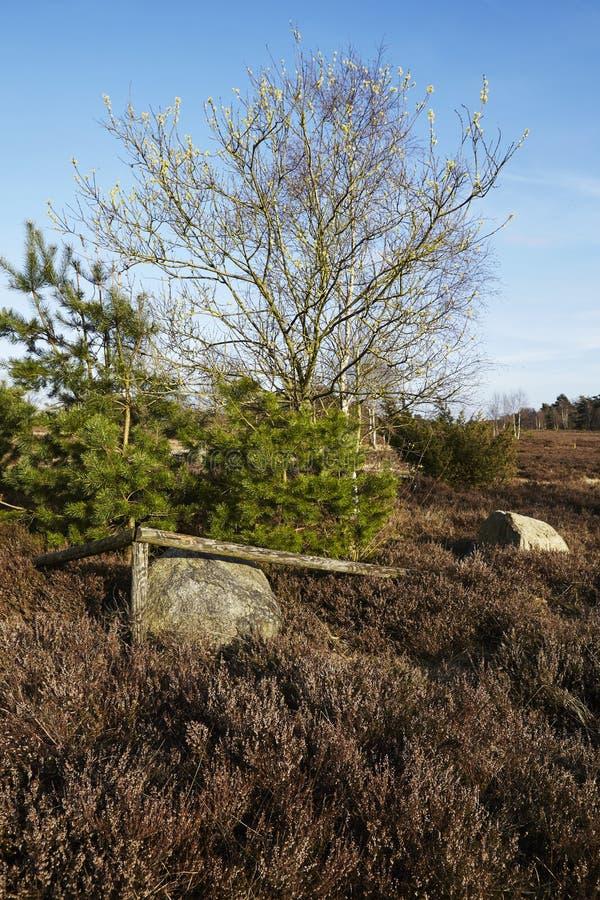 Árboles en tierra en primavera fotos de archivo libres de regalías
