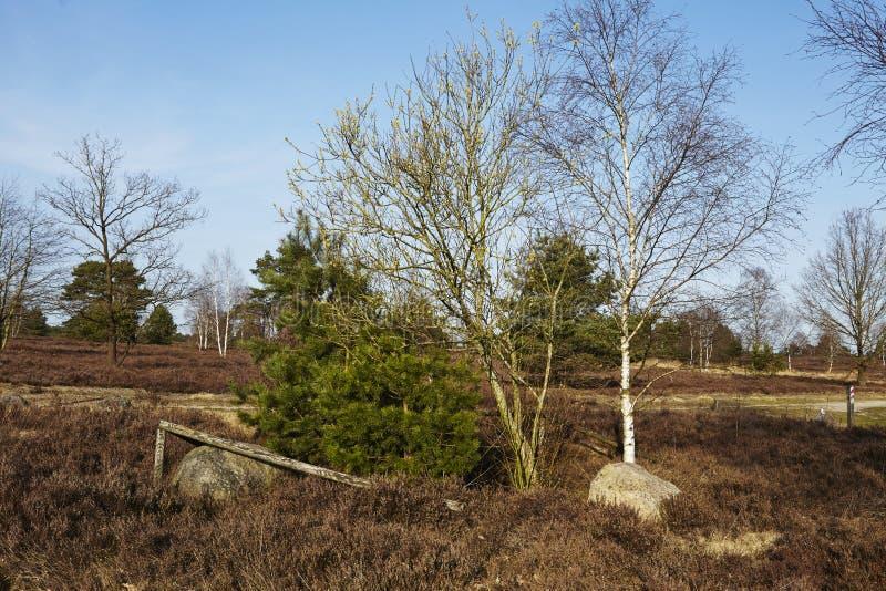 Árboles en tierra en primavera imágenes de archivo libres de regalías