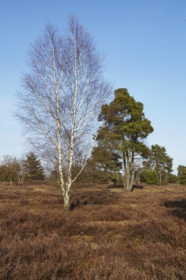 Árboles en tierra en primavera foto de archivo