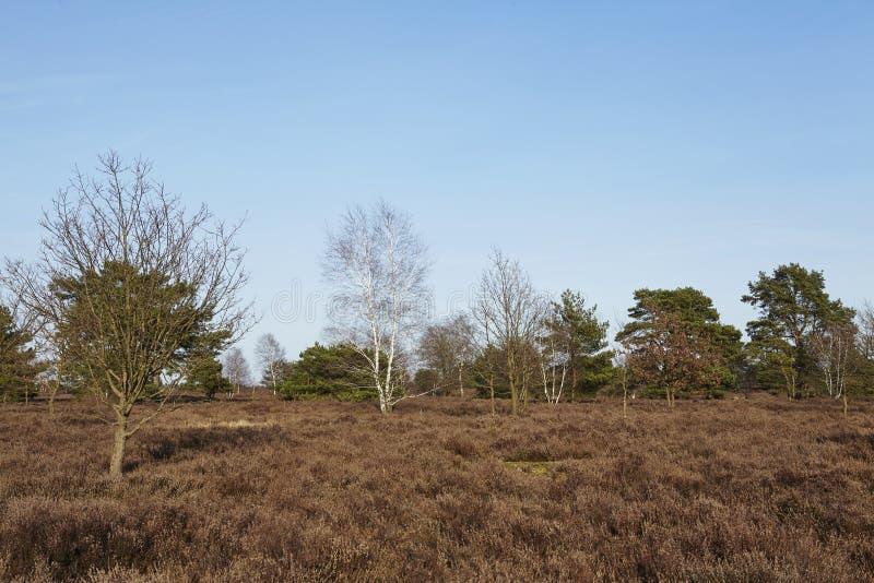 Árboles en tierra en primavera imagen de archivo