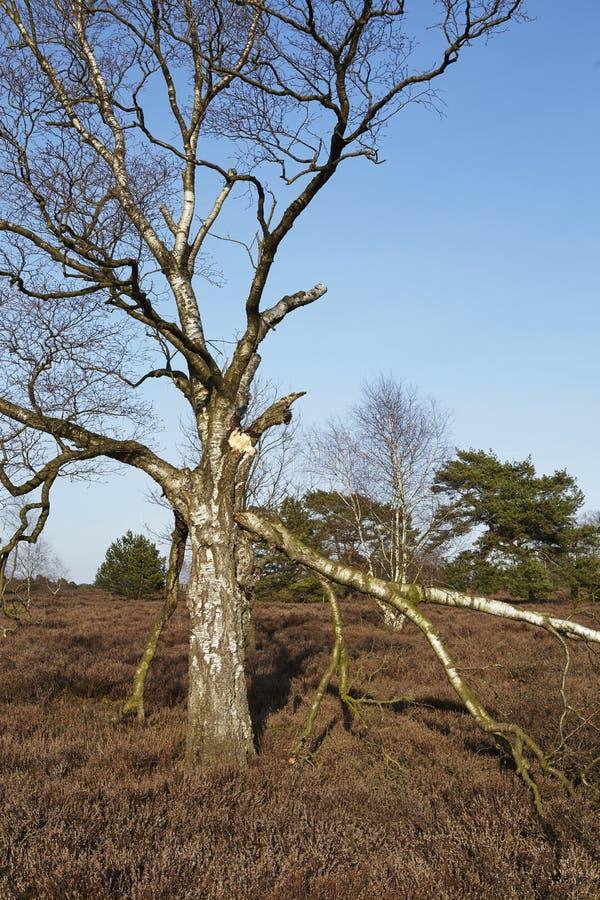 Árboles en tierra en primavera foto de archivo libre de regalías