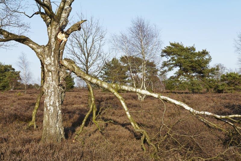 Árboles en tierra en primavera fotografía de archivo libre de regalías