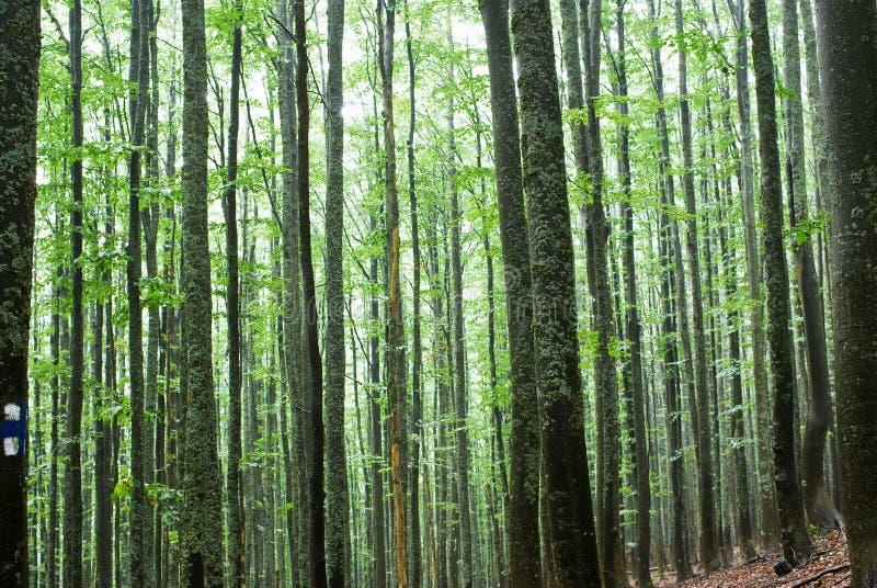 Árboles en un bosque fotos de archivo