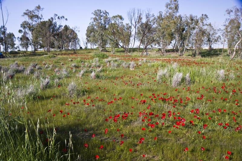 Árboles en un campo de flores fotos de archivo libres de regalías
