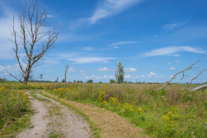 Árboles en un campo florido herboso verde debajo de un cielo nublado azul en luz del sol imagenes de archivo