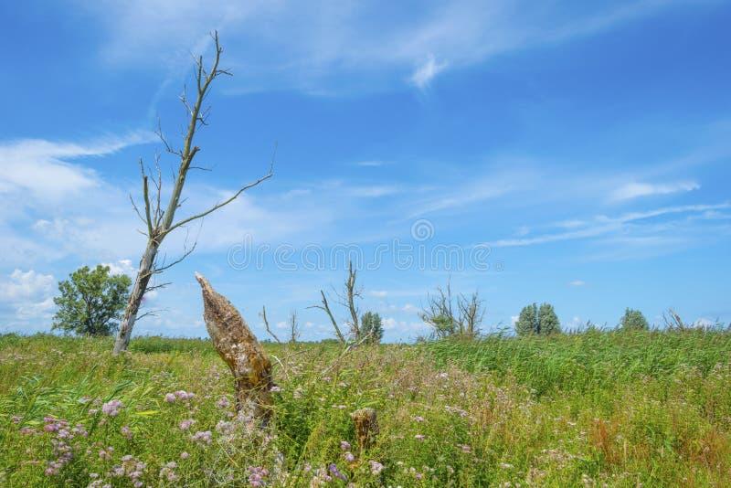 Árboles en un campo florido herboso verde debajo de un cielo nublado azul en luz del sol imagen de archivo