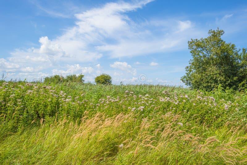 Árboles en un campo florido herboso verde debajo de un cielo nublado azul en luz del sol foto de archivo
