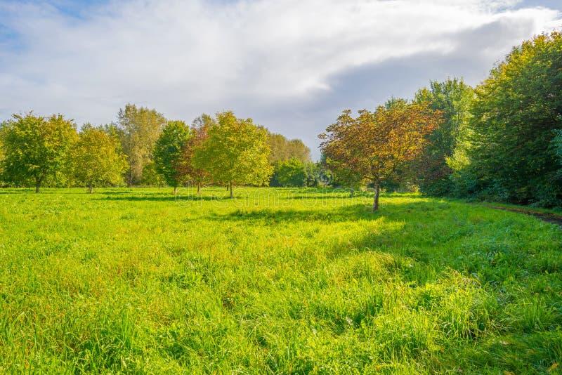 Árboles en un campo soleado debajo de un cielo nublado azul en la caída imagen de archivo
