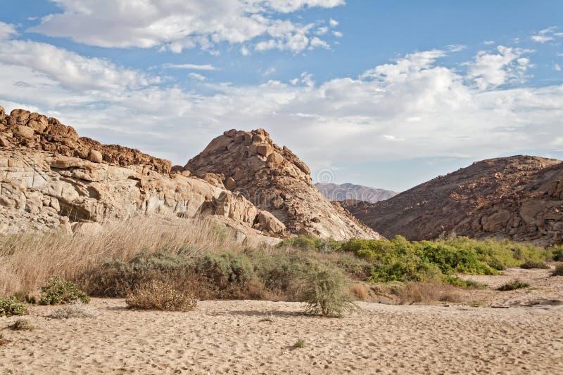 Árboles en un cauce del río seco, Namibia imagenes de archivo