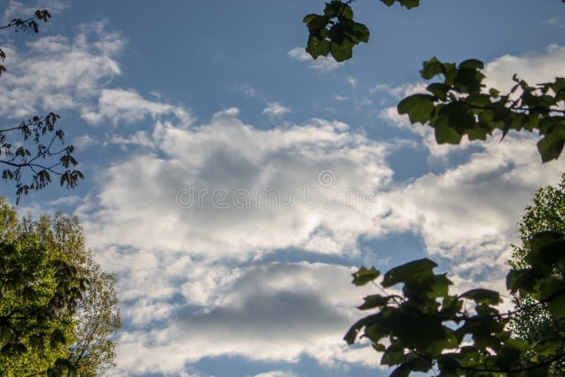 Árboles en un día claro fotografía de archivo libre de regalías