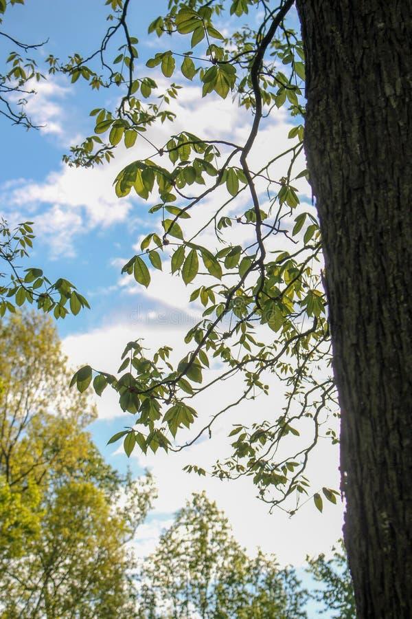 Árboles en un día claro imagen de archivo