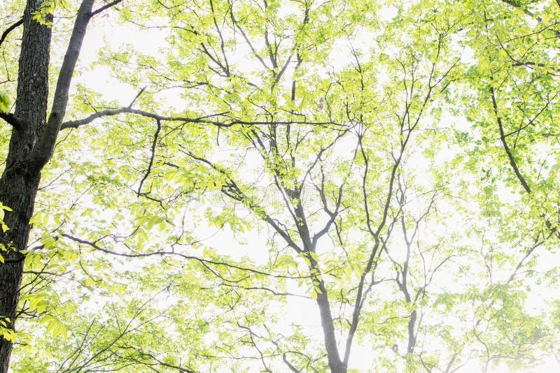 Árboles en un día claro imagen de archivo libre de regalías