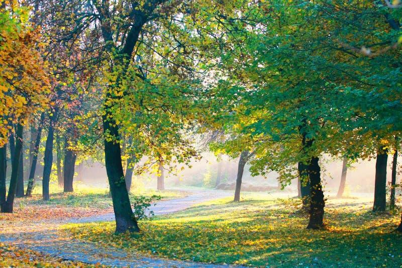 Árboles en un parque fotos de archivo libres de regalías