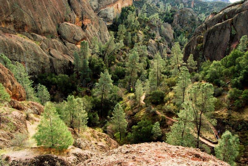 Árboles en un valle imagen de archivo