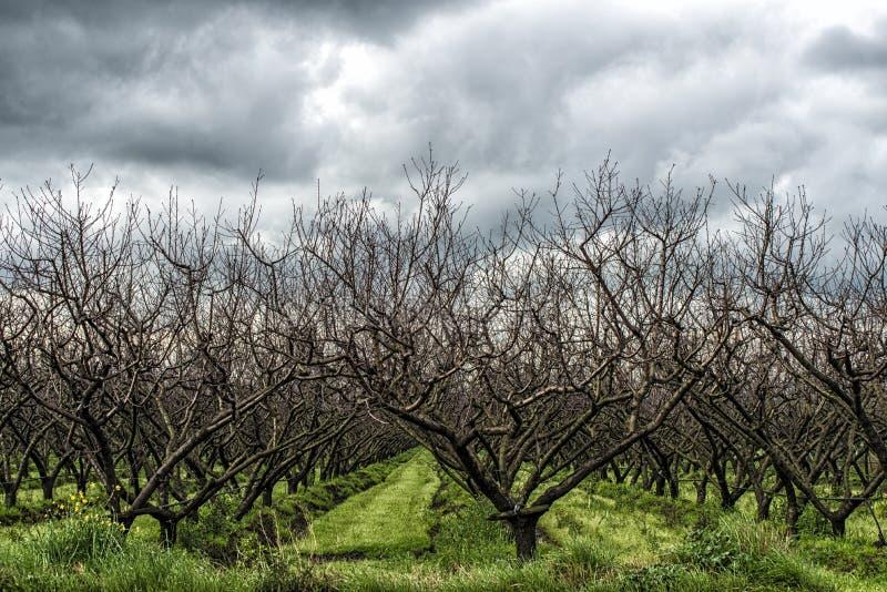 Árboles en una fila foto de archivo libre de regalías
