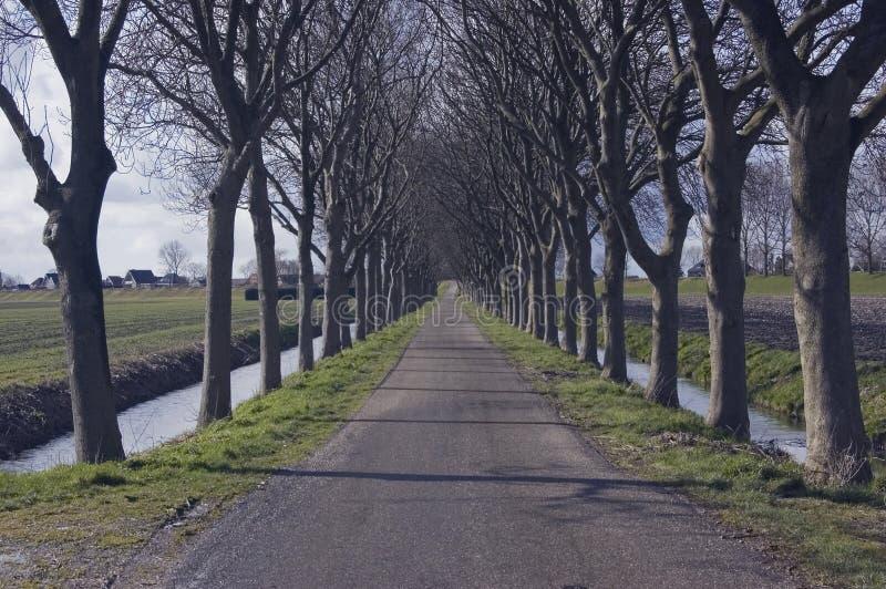 Árboles en una fila fotos de archivo libres de regalías