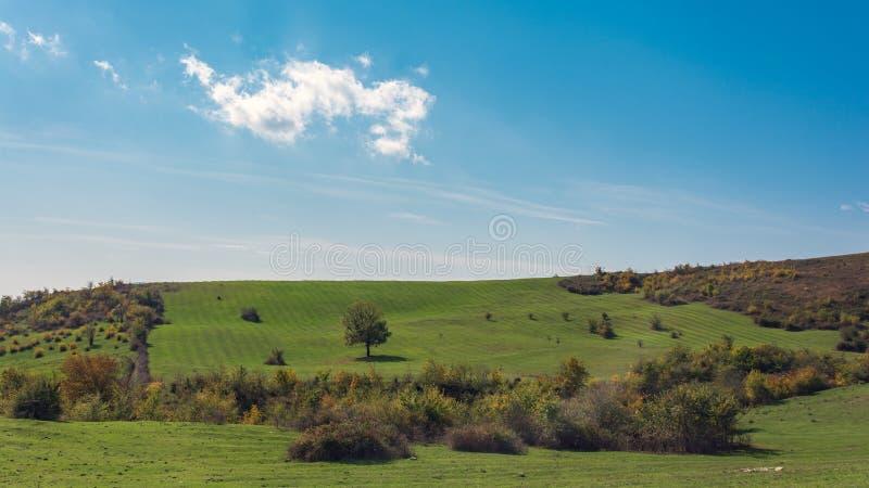 Árboles en una ladera verde fotos de archivo