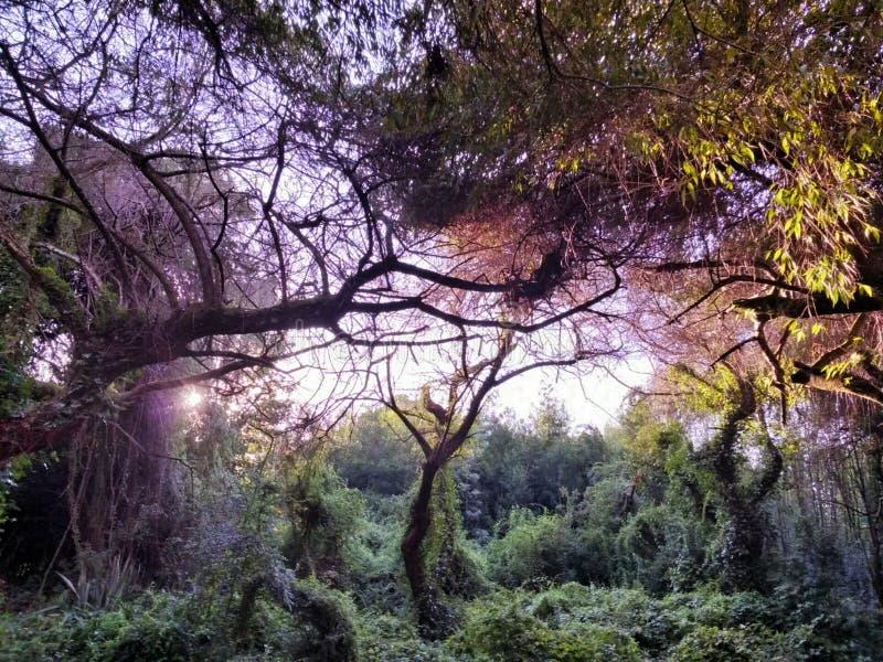 Árboles en universidad meridional foto de archivo