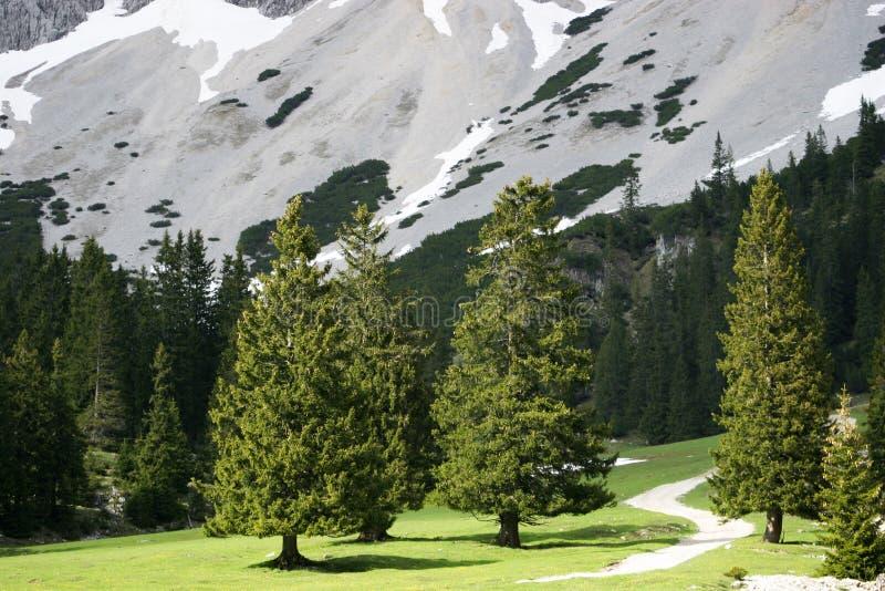 Árboles en valle alpestre foto de archivo libre de regalías