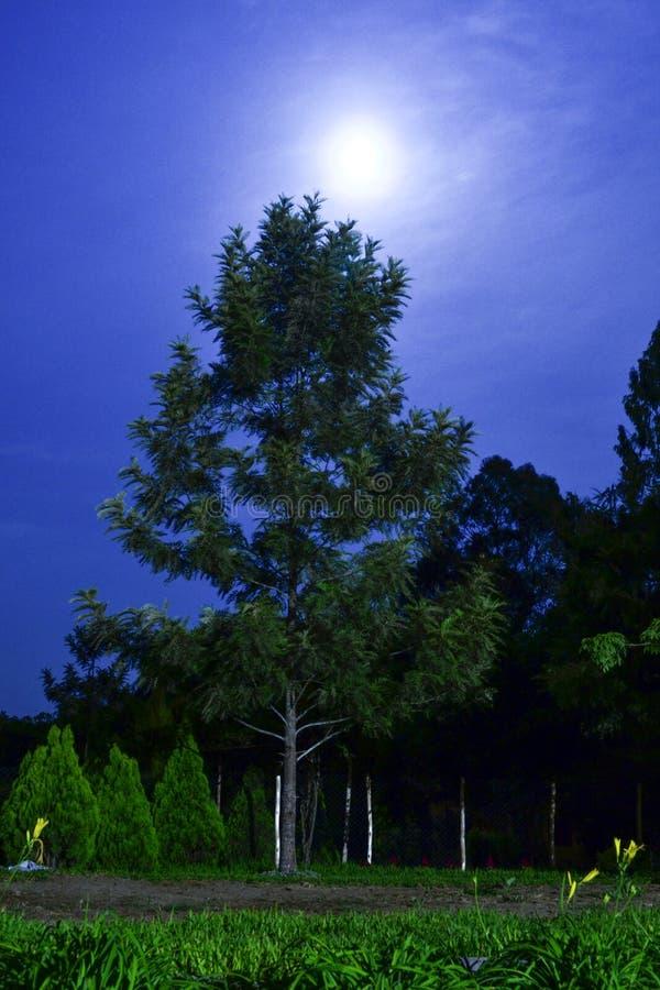 Árboles encendidos por el claro de luna fotos de archivo libres de regalías