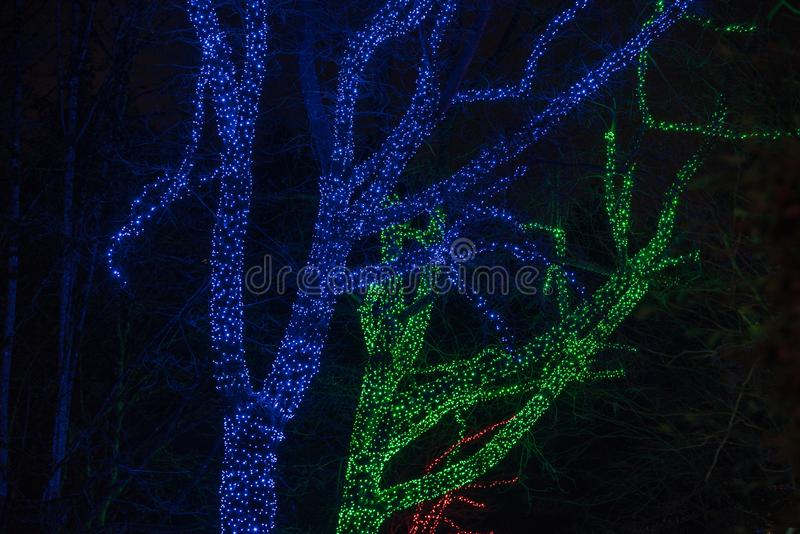 Árboles envueltos con la malla de las luces de la Navidad imágenes de archivo libres de regalías