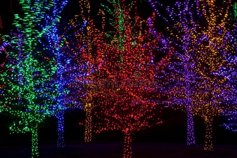 Árboles Envueltos En Las Luces LED Para La Navidad Imagen de archivo ...