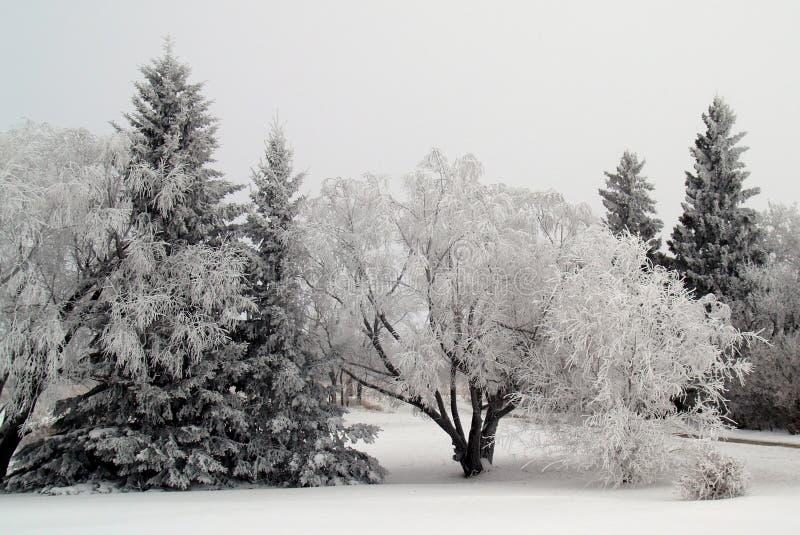 Árboles escarchados fotografía de archivo